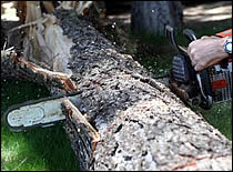 Photo of chain saw and tree trunk.